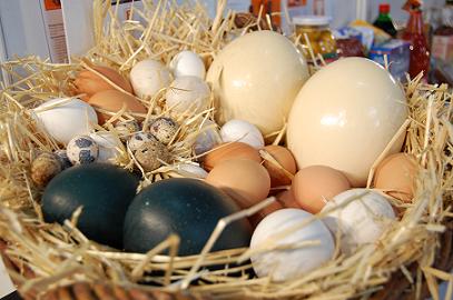 Huevos de Emú, huevos verdes con un sabor original