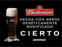 Cerveza Budweiser elaborada con arroz transgénico no apto para consumo humano