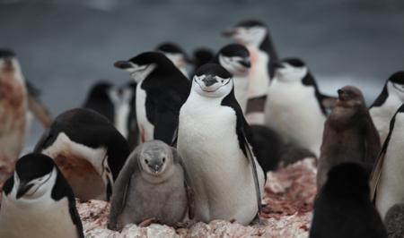 11 recursos, tutoriales y webs sobre Linux para que te animes a dar los primeros pasos