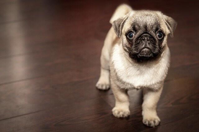 ¿Es verdad que las mujeres prefieren perros pequeños y los hombres perros más grandes?