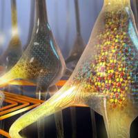 El cerebro artificial está cada vez más cerca: IBM crea las primeras neuronas artificiales de cambio de fase