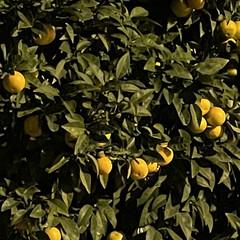 Foto 82 de 88 de la galería imagenes-tomadas-con-el-iphone-12-mini en Xataka