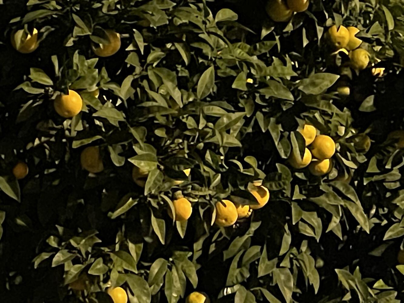 Foto de Imágenes tomadas con el iPhone 12 mini (82/88)