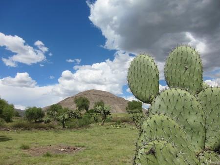 El pulque estará de fiesta en Teotihuacán el próximo 1 y 2 de junio