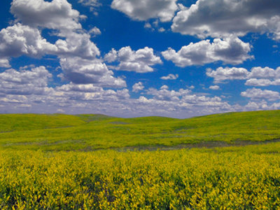 Dakota del Sur: Un palacio de maíz, osos curiosos y una visita a la Familia Ingalls