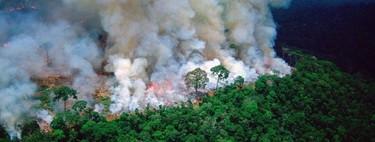 La moda también ayudará al Amazonas: LVMH anuncia una donación millonaria (aunque mucho menor que la de Notre Dame)