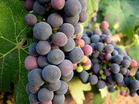 Rioja clásico versus Rioja moderno