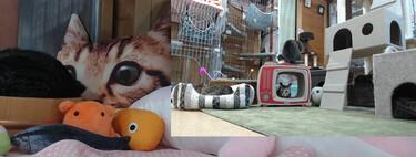Hay un Twitch que emite a unos gatos las 24 horas del día y tiene 20.000 seguidores. En Japón, obvio