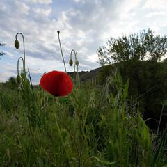 Foto 9 de 12 de la galería fotografias-de-la-sony-sony-zv-e10 en Xataka Foto