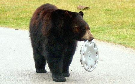Hay gente con mucha suerte, entrega 19: oso que regala tapacubos