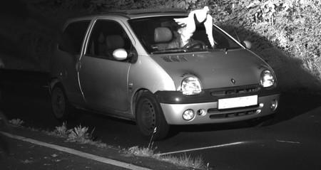 El misterioso caso de la paloma que salvó a un conductor de una multa de radar por exceso de velocidad