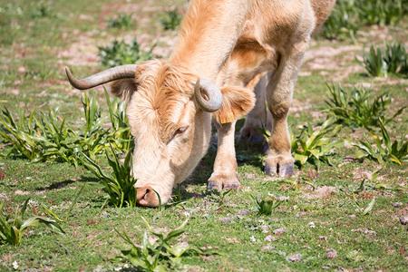 Canon100 400 Vaca
