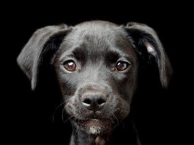 Estas son algunas de las mejores fotos de perros que vais a ver este año; también algunos de los canes más feos