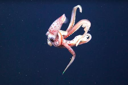Biodiversidad marina en Australia, una abuelita no puede subir fotos de su nieto a Facebook y más: Galaxia Xataka Foto