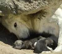 Padres y madres depredadores, por Laura Gutman