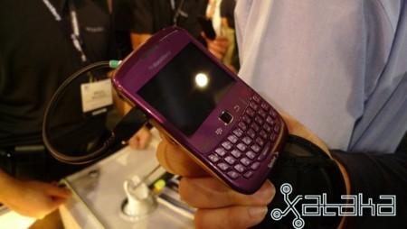 bb-purpura.jpg