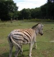 Vacaciones con niños: Marcelle natureza, un Zoo especial para la familia