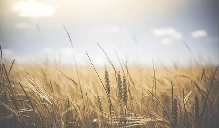 Un tercio de la producción mundial actual de alimentos puede quedar fuera de un espacio climático seguro para fin de siglo