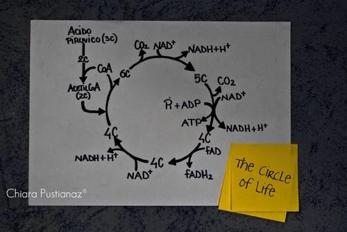 La obtención de energía en función de la intensidad