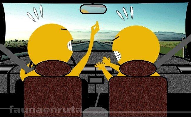 Discusión al volante, distracción constante