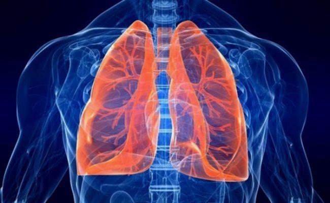 Se desarrolla el primer pulmón de laboratorio