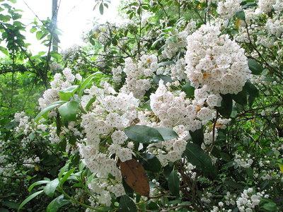 Estas flores lanzan el polen a más de 400 veces la aceleración debida a la gravedad,