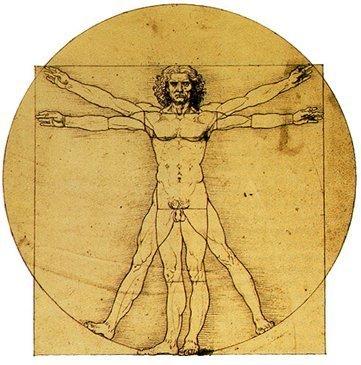 Las insólitas cifras del cuerpo humano