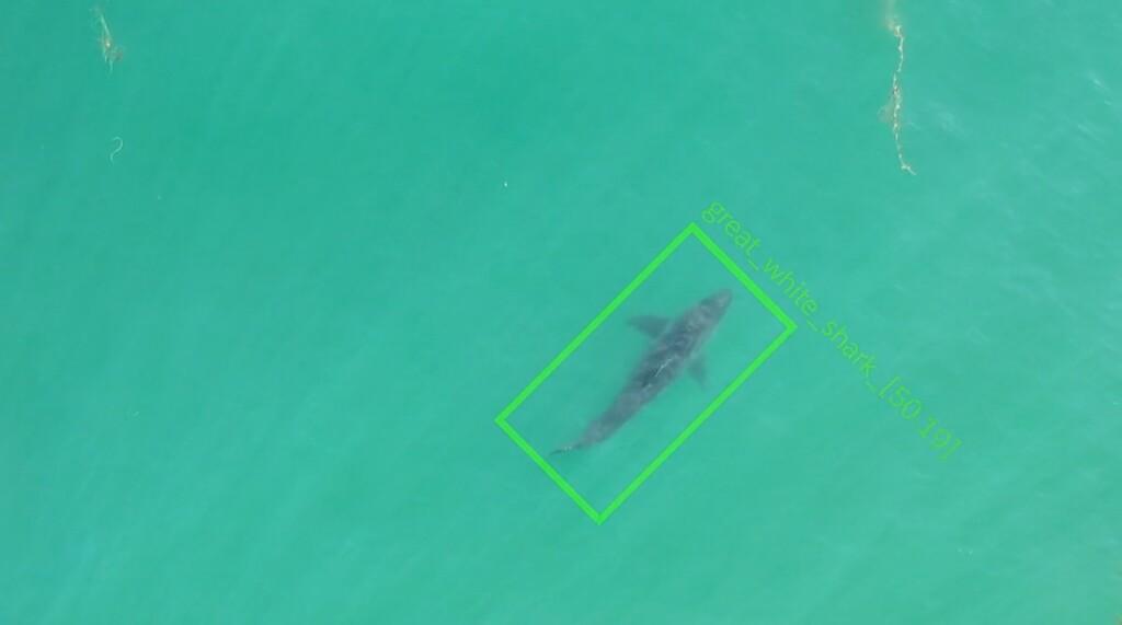 Estos drones para detectar tiburones cuando se acercan a la playa envían avisos en tiempo real para tranquilizar a los bañistas