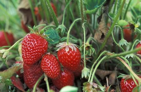 Fresh Strawberries 1813412 1280
