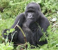 Los 10 mejores destinos para ver vida salvaje en Africa (VI)