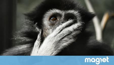 Por fin la humanidad puede responder uno de sus grandes dilemas: qué animales se tiran pedos y cuáles no