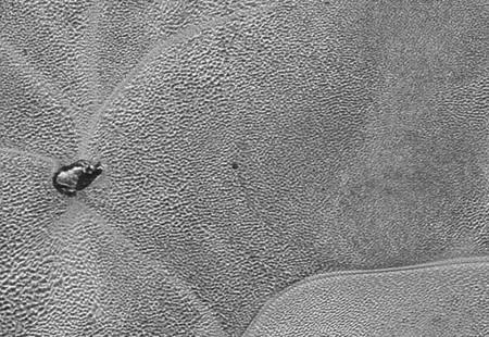 ¿Cómo es la superficie de Plutón? Esta alucinante imagen en alta resolución nos lo cuenta