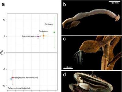 En las profundidades del océano Índico hemos encontrado estas criaturas