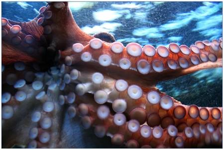 Octopus 250101 1920