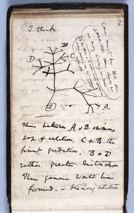 Darwinstreeoflifesketch 1200x1909