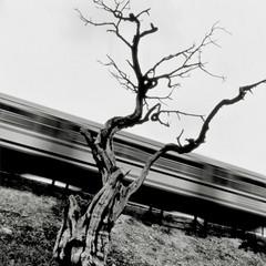 Foto 1 de 29 de la galería galeria-de-ganadores-de-caminos-de-hierro en Xataka Foto