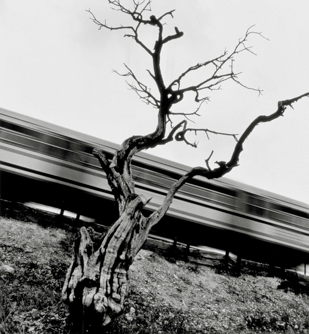Foto de Galería de ganadores de Caminos de Hierro (1/29)