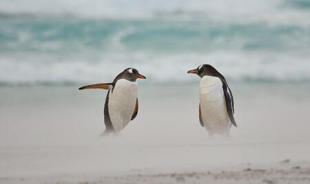 Directing Penguin