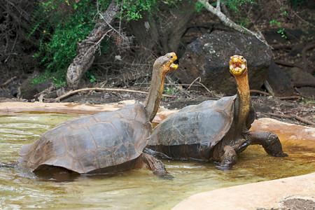Dos Tortugas Como Diego