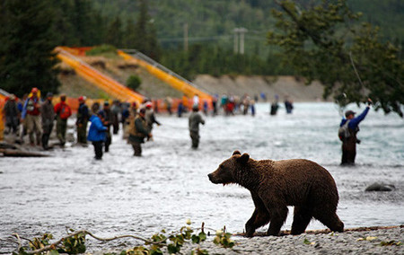 Alaska: viaje en tren al hogar del oso pardo