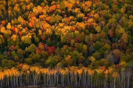 otoño10