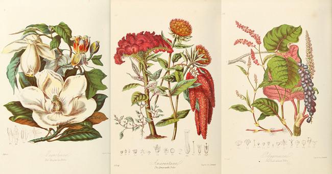 29 preciosas ilustraciones botánicas realizadas por las mujeres pioneras en la historia natural