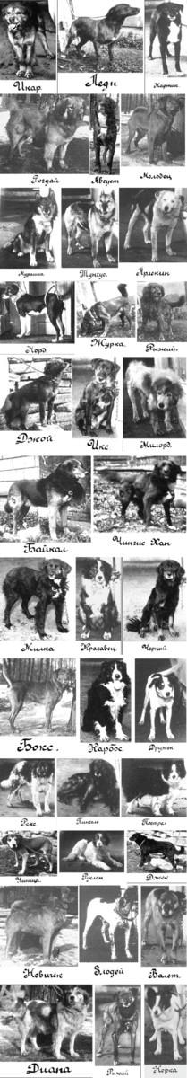 Pavlovs Dogs