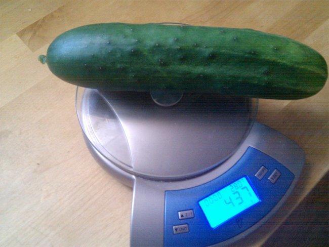 1 kilo de pepinos o #1kilopepinos