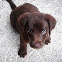 Tu cachorro está programado genéticamente para obedecerte. Y la ciencia ya sabe por qué