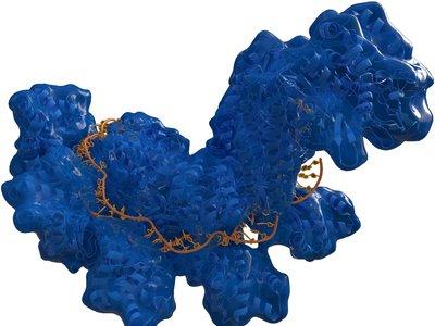 El fantasma de Gelsinger y las prisas de la carrera biotecnológica: la revolución CRISPR tendrá que ser más lenta de lo esperado