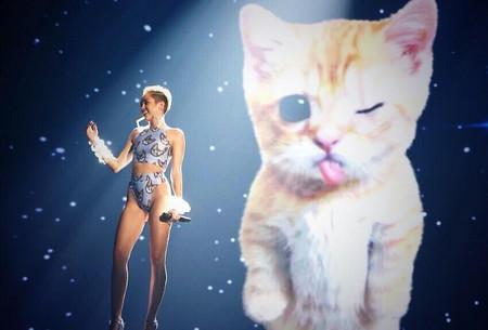 Miley cyrus gato