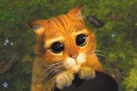 Singularidades extraordinarias de animales ordinarios (XXIII): el gato