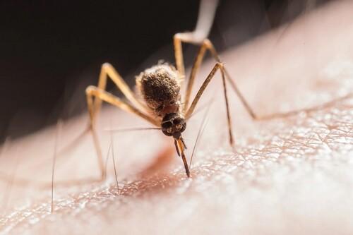 Los mejores antimosquitos según los comentaristas de Amazon