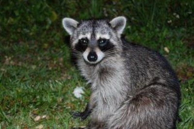 Muchas más cosas que no sabías sobre animales que creías conocer muy bien (IV)